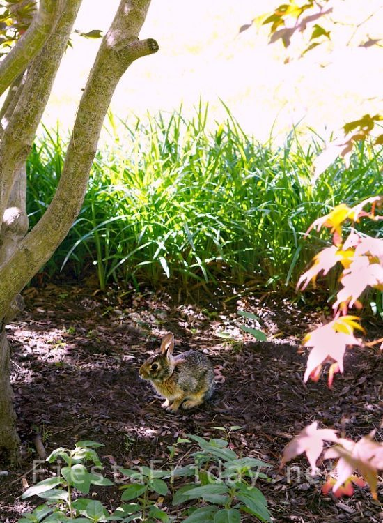 bunny-in-the-garden