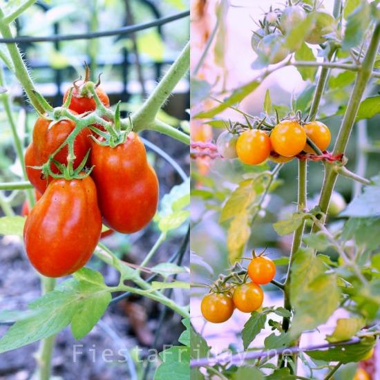 vine-ripened-homegrown-tomatoes