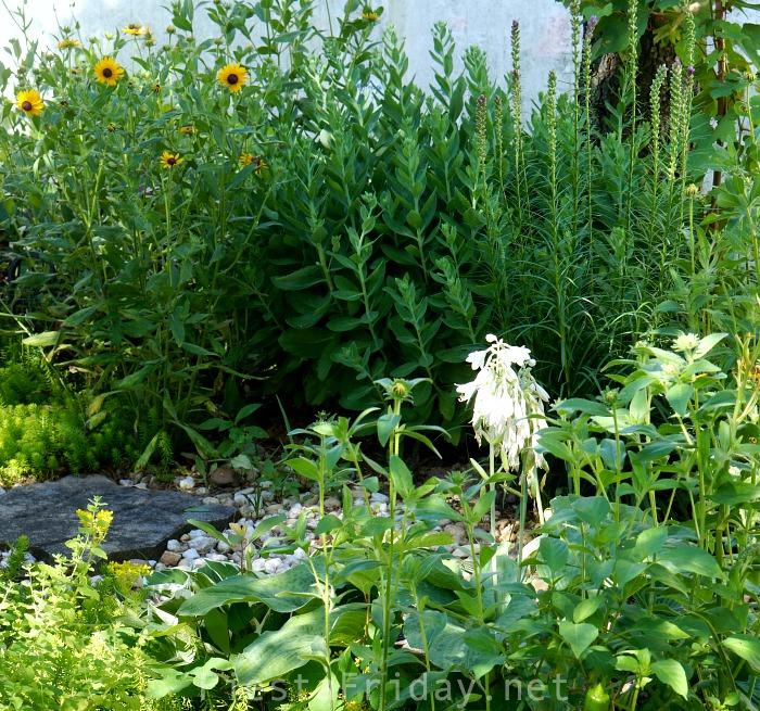 Unruly Garden | FiestaFriday.net