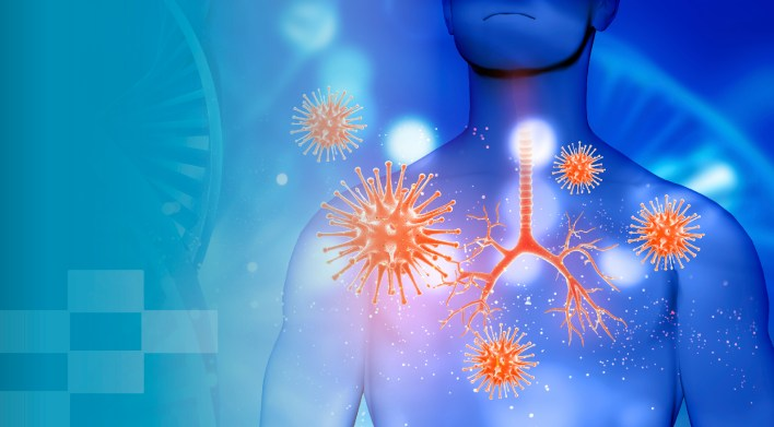 how does the immune system work in the human body?   fifarma