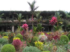 Tropical gardening at University of the South Pacific