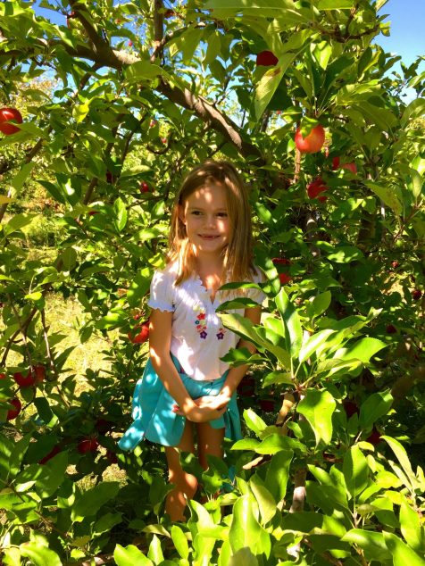Apple picking and hanging out at Wilkens farm in Westchester, NY