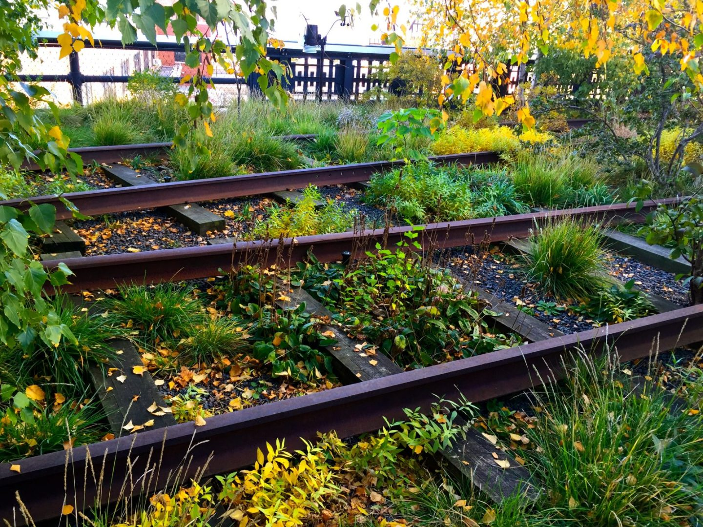 New York's Beloved Park: Everyone Loves the High Line