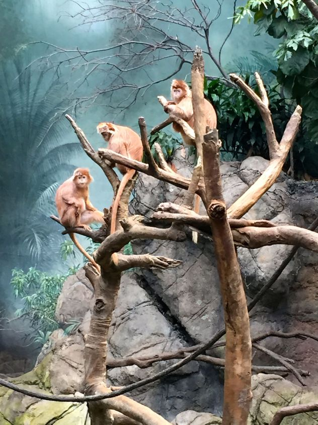 Taking an up close look at monkeys at the Bronx Zoo for a family afternoon out. The most famous attraction in the Bronx.