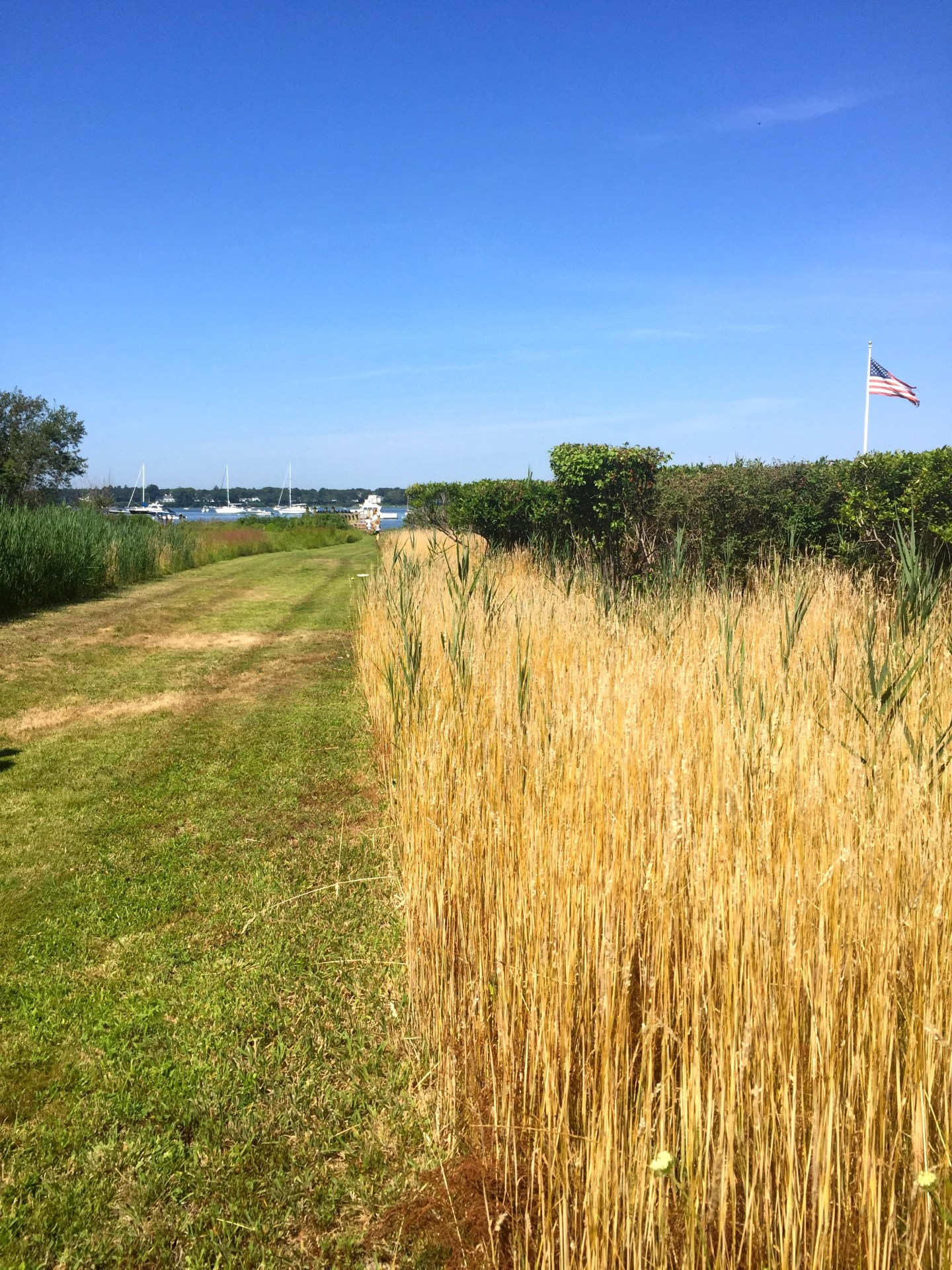 Walking to the Eel River in Osterville, MA.