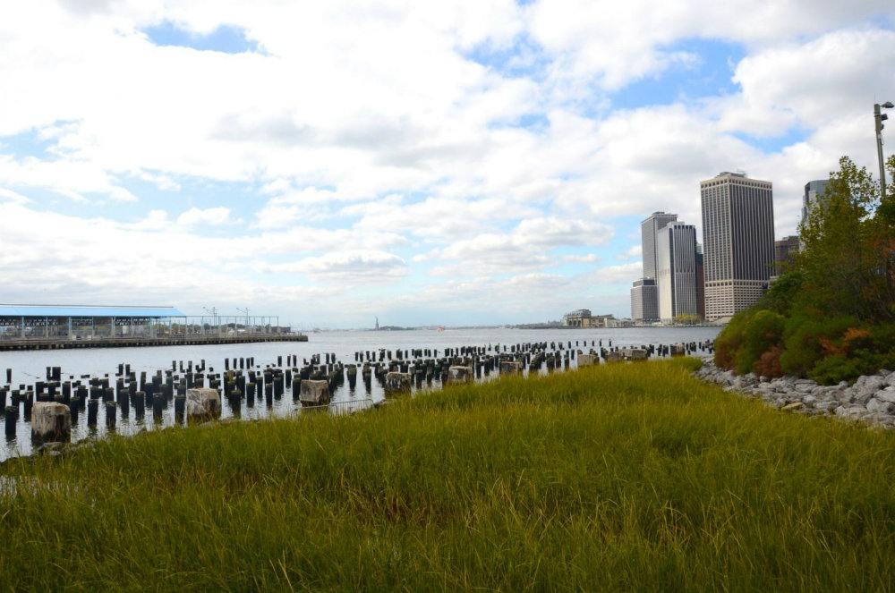 Grasslands in Brooklyn Bridge Park