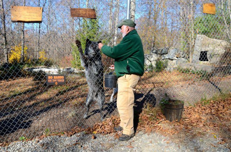Wolf-conservation-center-DSC_5360