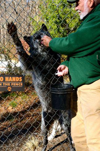 wolf-conservation-center-DSC_5367