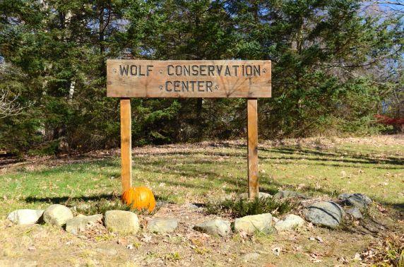 wolf-conservation-center-DSC_5380