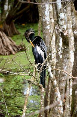 bird-corkscrew-naples-florida-DSC_5670