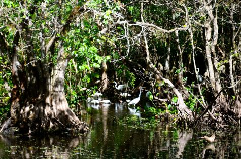 bird-sighting-corkscrew-swamp-DSC_5642