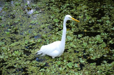 bird-swamp-naples-florida-DSC_5675