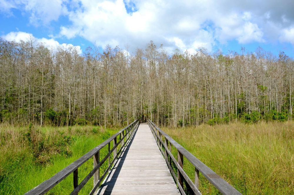 Boardwalk going into Corkscrew Swamp Sanctuary in Naples Florida.