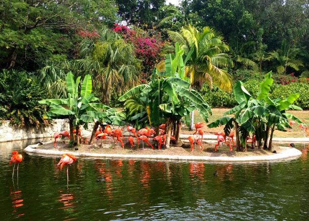 Family activities in Miami includes seeing the flamingos at Jungle Island