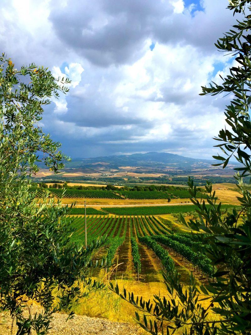 Family friendly wine tasting in Tuscany