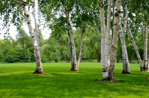 trees-pepsico-sculpture-gardens-