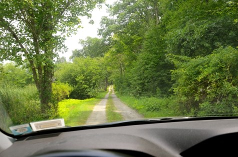 driving-action-wildlife-