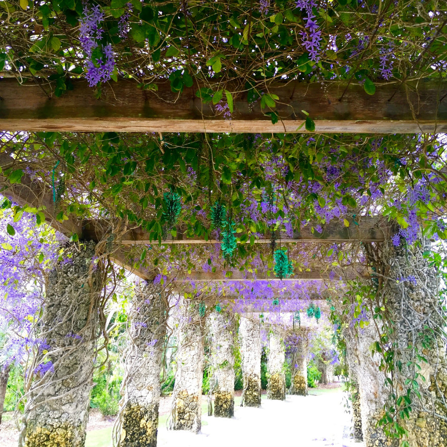 Tunnel of lilacs at the Naples Botanical Garden