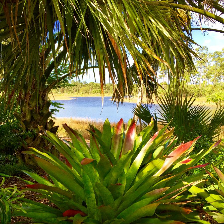 Paradise at the Naples Botanical Garden