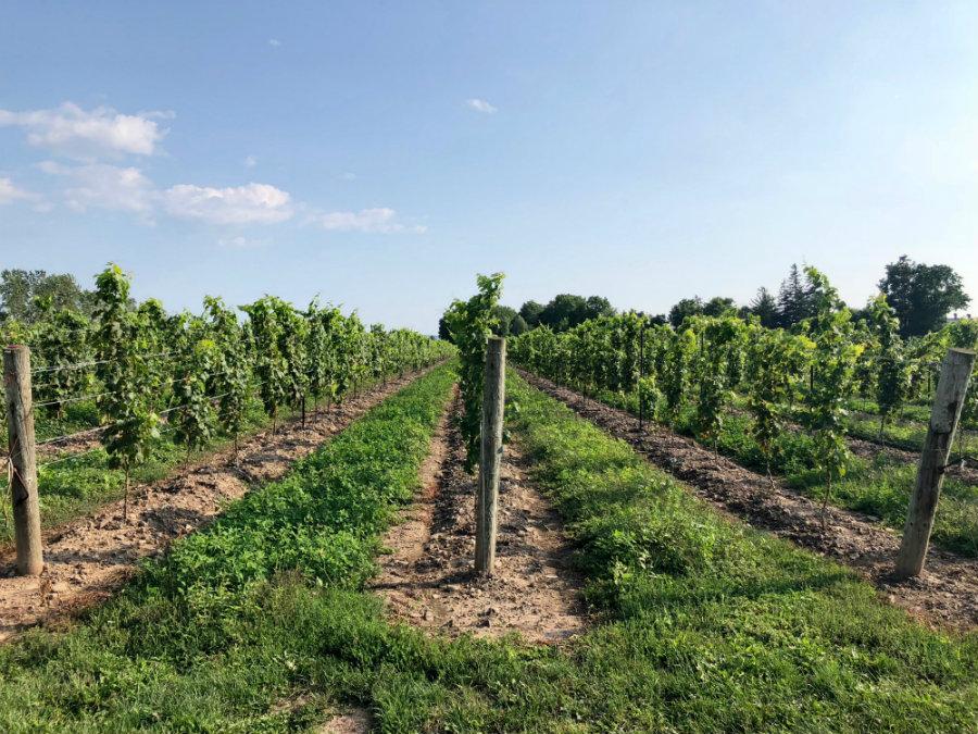Wine tasting in Niagara-on-the-Lake in Canada