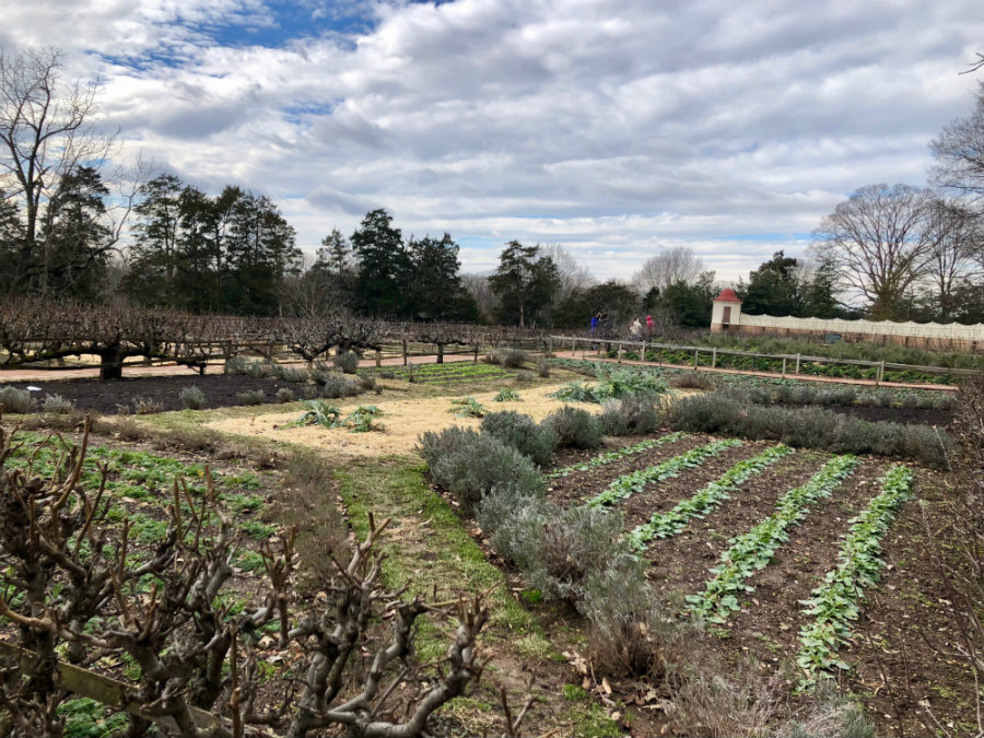The gardens at the plantation of George Washington in Mt. Vernon
