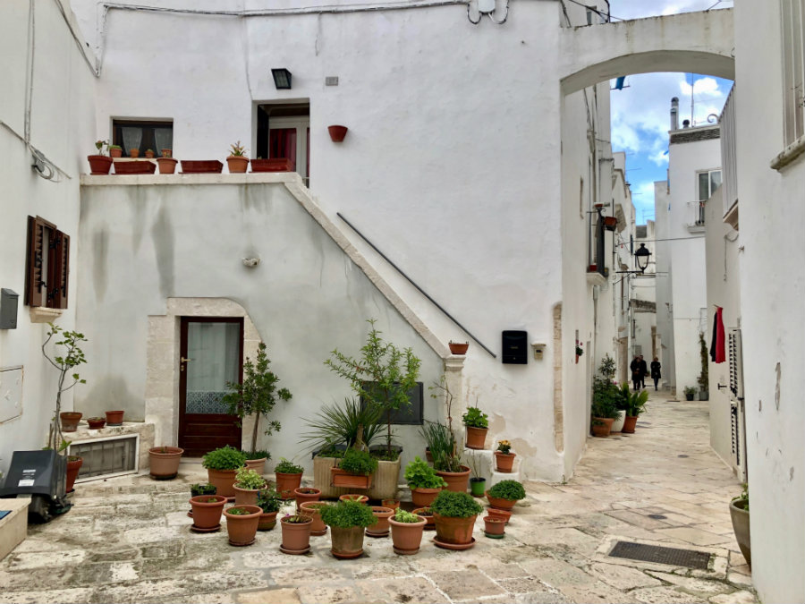 Puglia plants