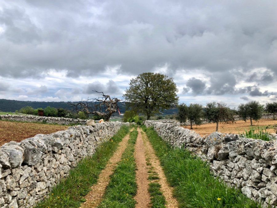 Walking through Puglia countryside from Alberobello to Locorotondo