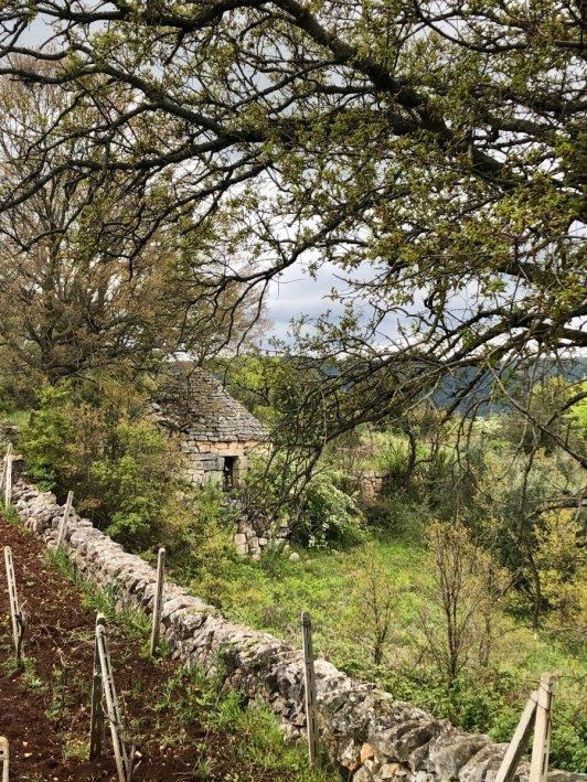 A Trullo house in Puglia countryside