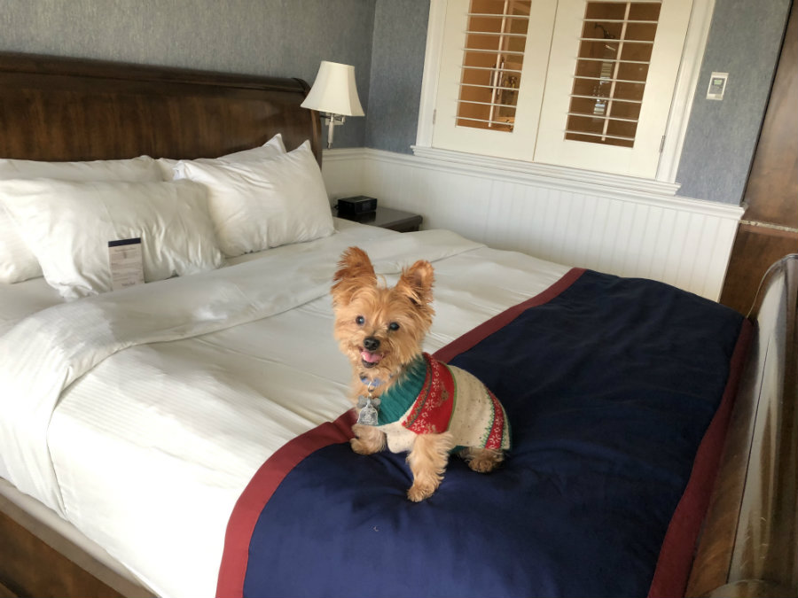 Why We Love the Pet-Friendly Madison Beach Hotel