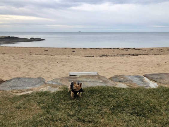 Beach walk with the dog at the Madison Beach Hotel