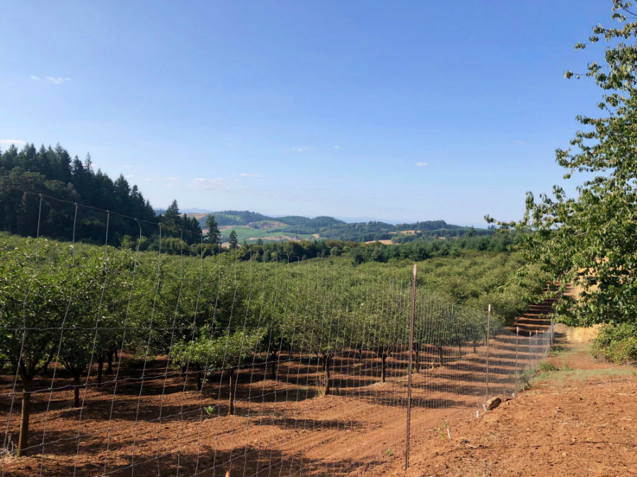 Oregon wine country in Willamette Valley