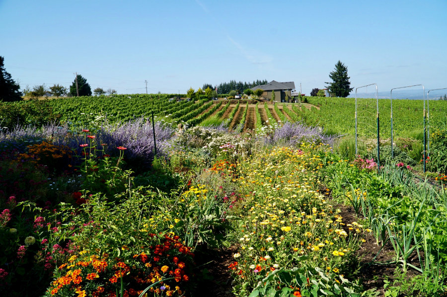 "Oregon Wine Country – Guide to America's ""Other"" Wine Region"