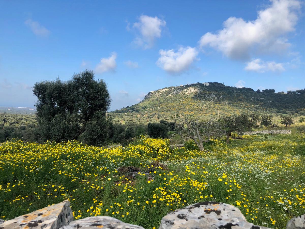 Masseria Morrone, Puglia countryside
