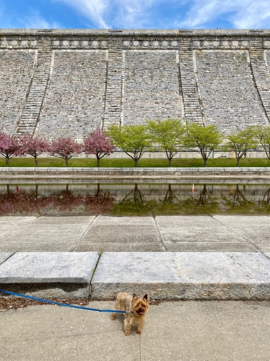 Dog-friendly walks in Westchester, Kensico Dam Plaza