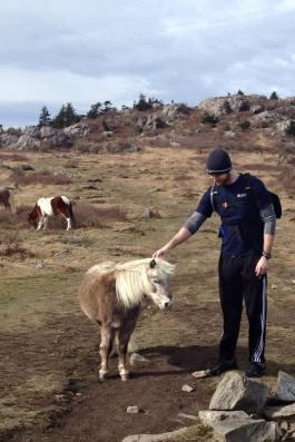 Mt. Rogers: Wild Ponies!