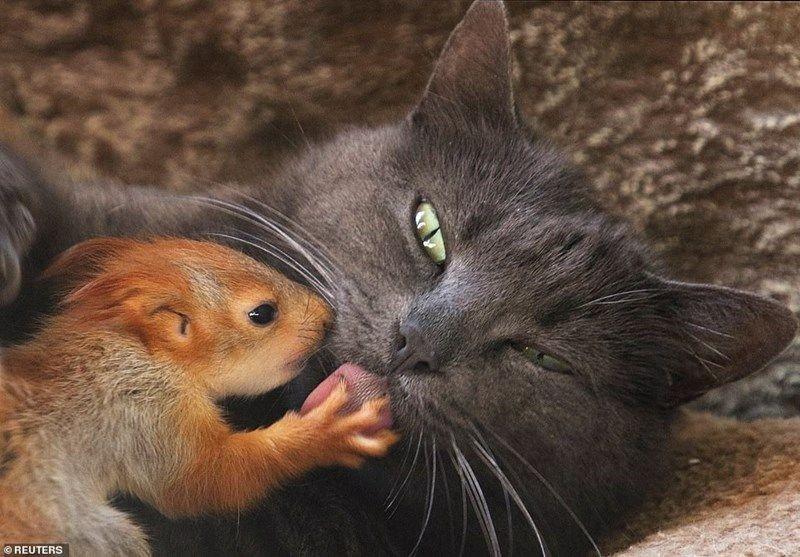FIFY STORE [VIDEO] Des bébés écureuils orphelins adoptés par une chatte !