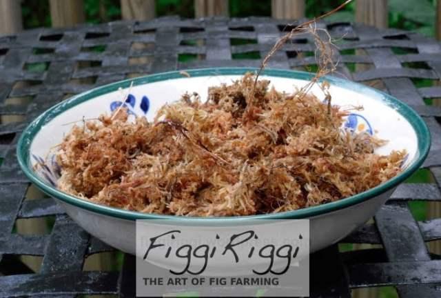 Bowl of moistened (not soaking wet) spagnum moss.