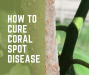 How to cure coral spot disease