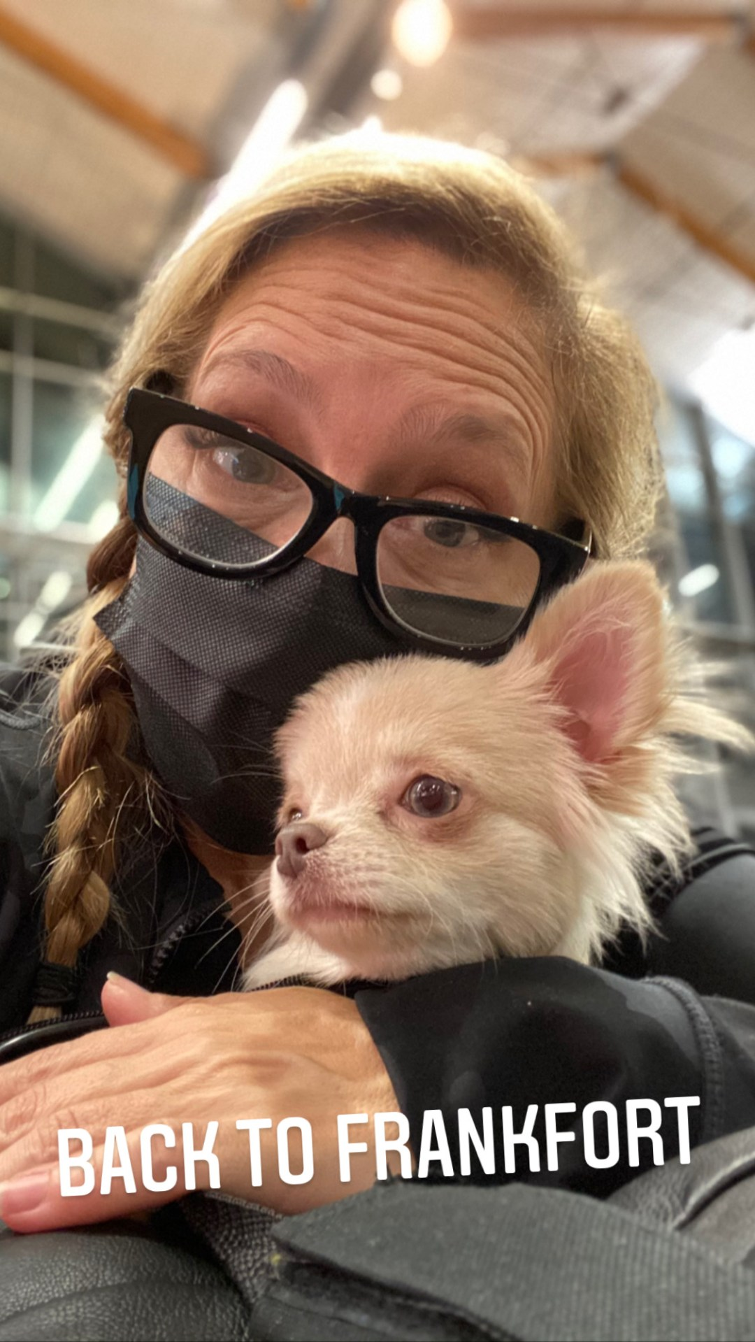 Flight Pet Nanny transporting a Chihuahua from Italy to the United States