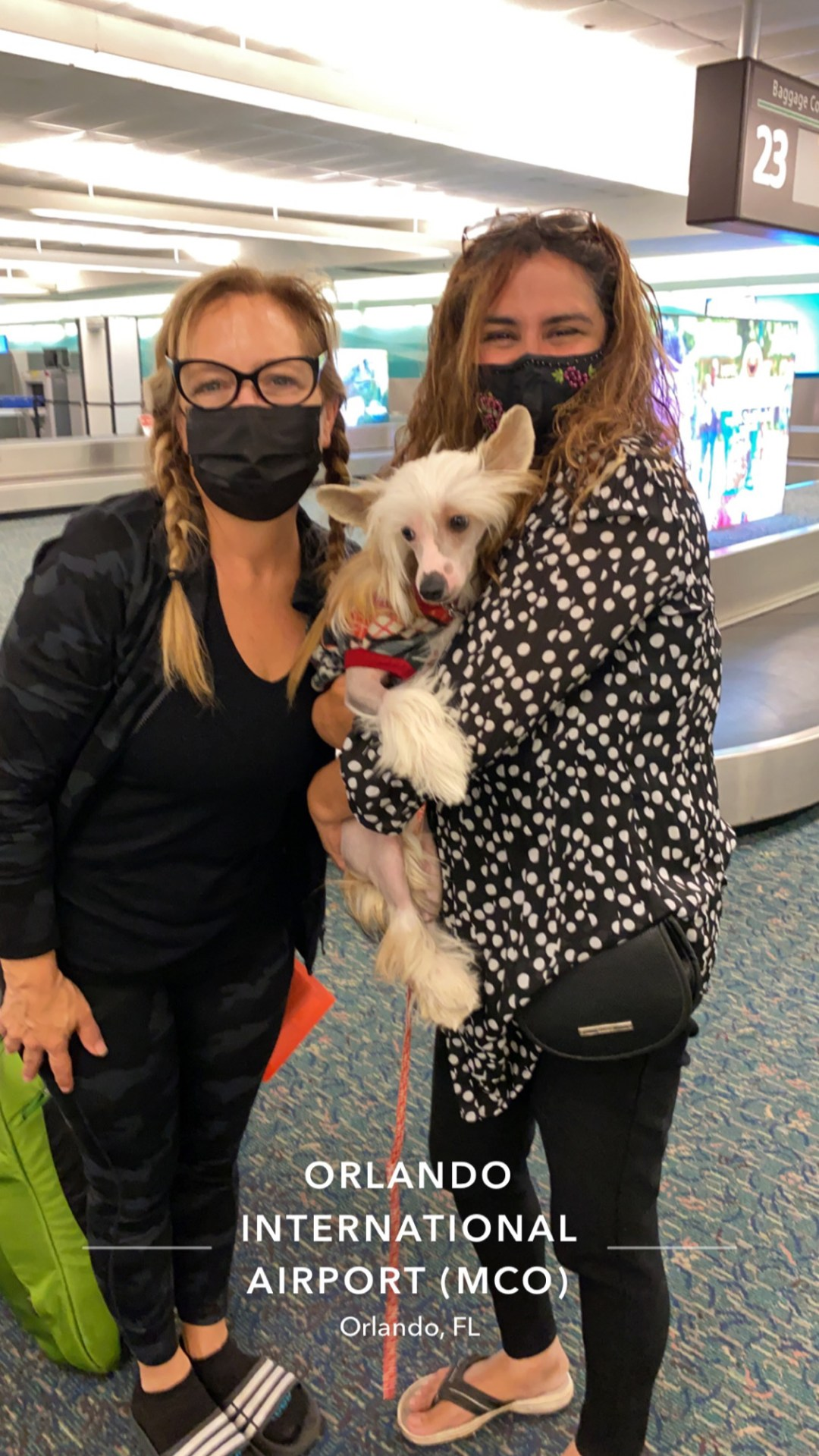 Flight Pet Nanny transporting two Chinese Cresteds from Turkey to the United States