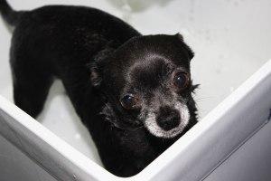 Blue getting her bath