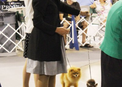 The Dog Show Gods Were Kind