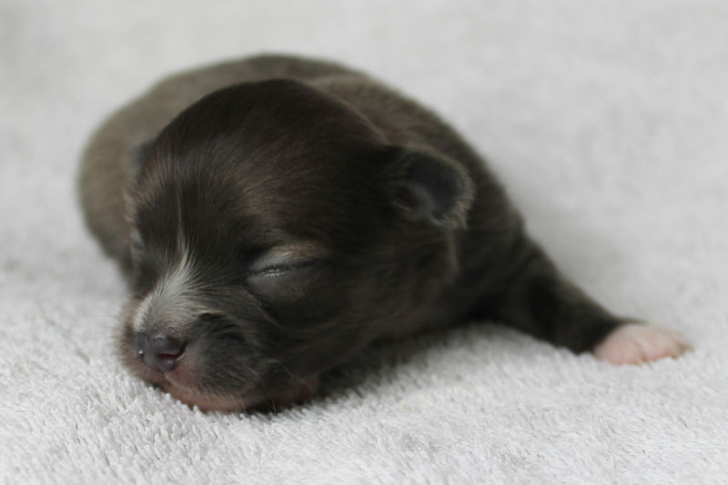 Stoli - 2 Weeks Old – Weight 12 3/4 ozs