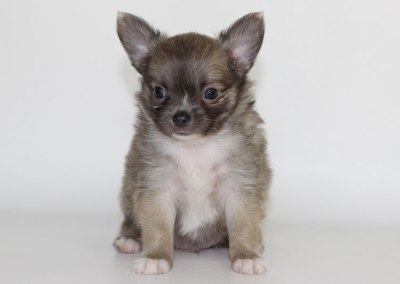 Stoli - 6 Weeks Old - Weight 1 lb 14 1/4 ozs
