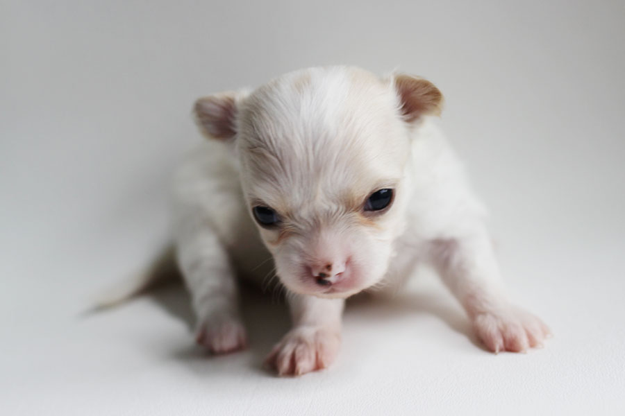 Milly - 3 Weeks Old- Weight 12.5 ozs
