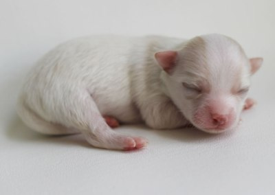 Rudy - 1 Week Old – Weight 6.6 ozs