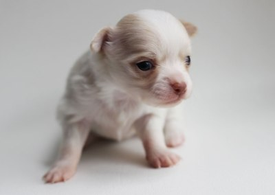 Rudy - 3 Weeks Old – Weight 12.5 ozs