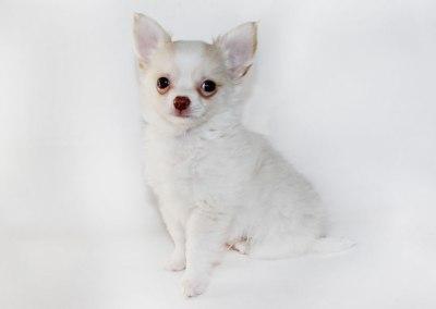Rudy - 8 Weeks Old – Weight 1 lb 9 oz