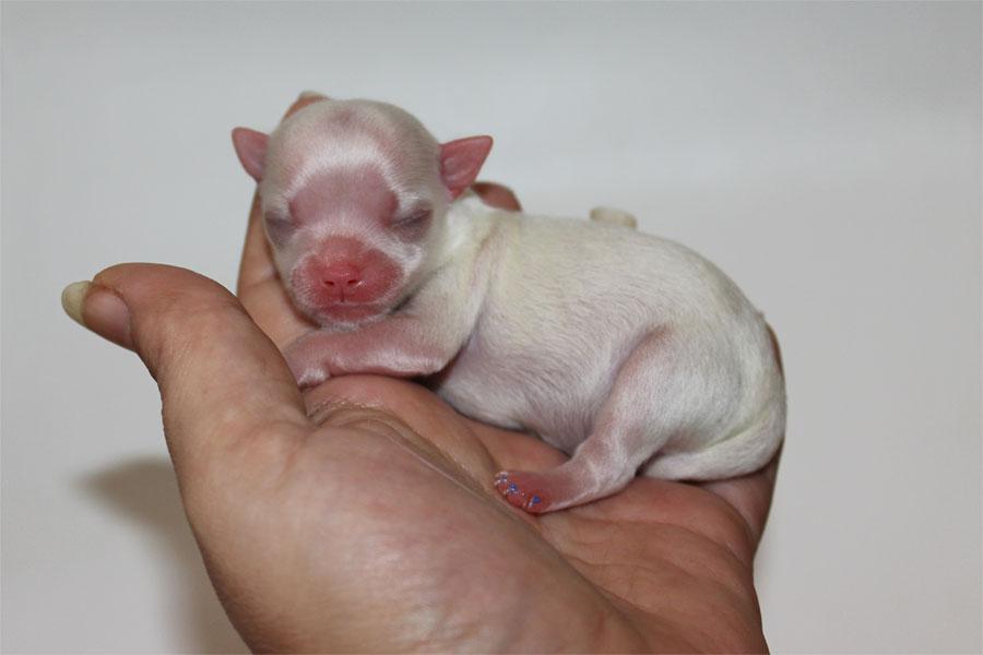 Ty - Born December 25, 2014  - 3.5 ounces