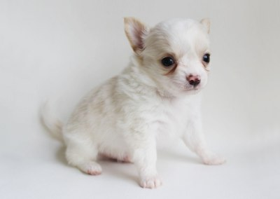 Coquito - 5 Weeks Old - Weight 1 lb 5.7 ozs